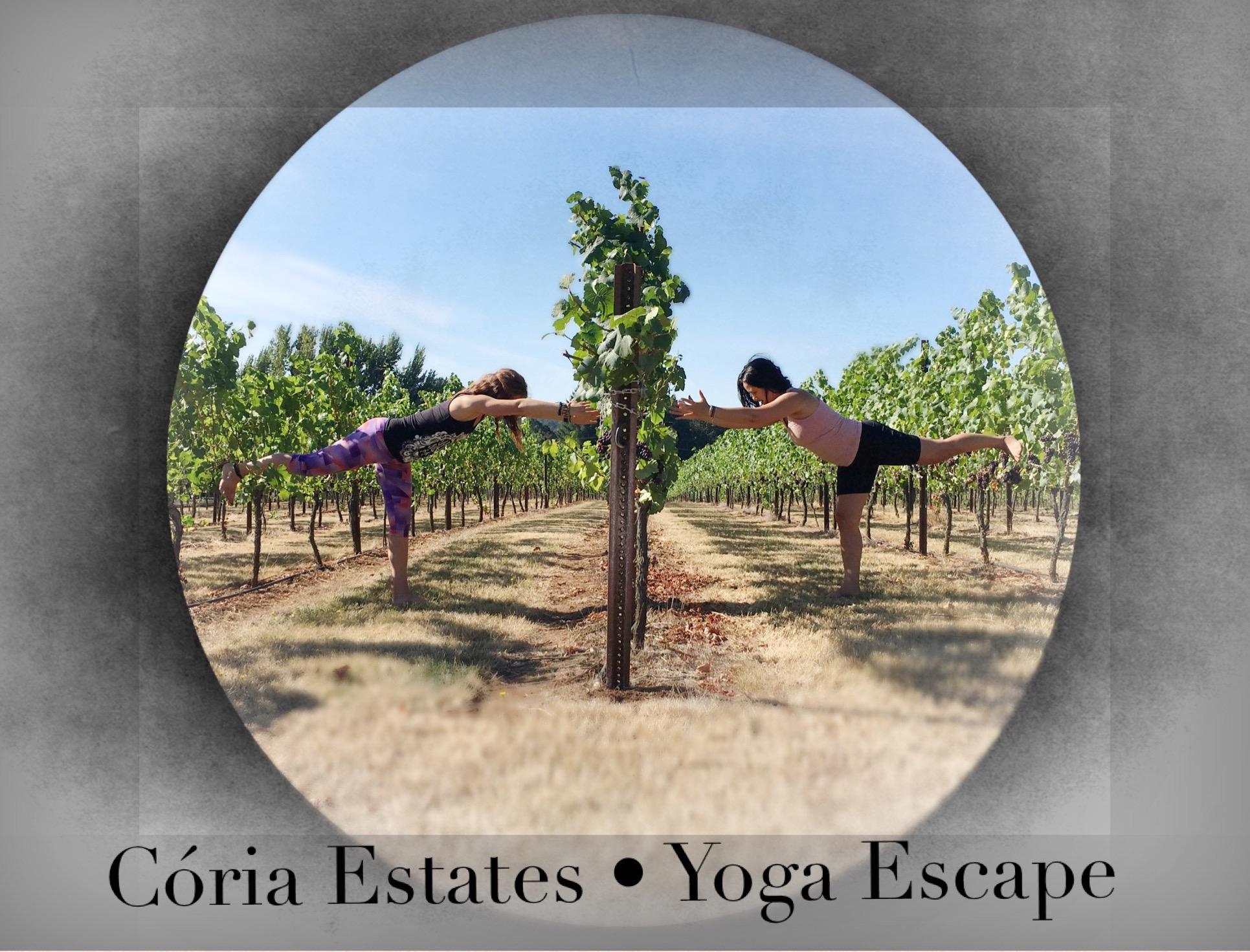 Coria Estates Yoga in the Vineyard Yoga in Salem Oregon